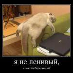 Энергосберегающий кот