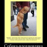 Собака-вдохновляка