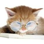 Котёнок в очках, фото-шутка