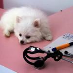 собака на столе у ветеринарного врача