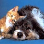 Котёнок с собакой