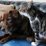 Собака и кошка - травмоопасное соседство