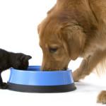 Кошка и собака едят из одной миски